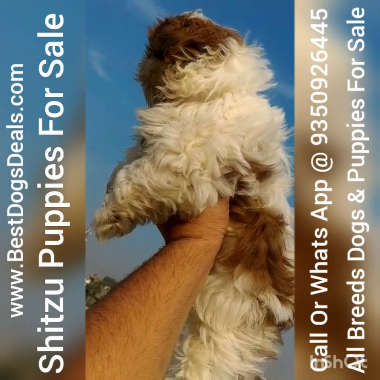 Bestdogsdeals Com Best Dog And Puppy For Sale Pet Shop In
