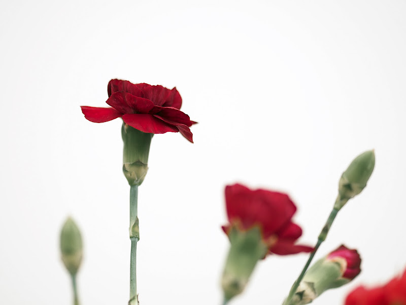 """ Un fiore per te...."" di D. Costantini"