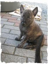 Photo: Hektor als pup