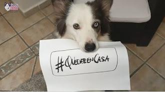Imagen de uno de los protagonistas del vídeo de Funny Dogs, Escuela de Adiestramiento en Granada.