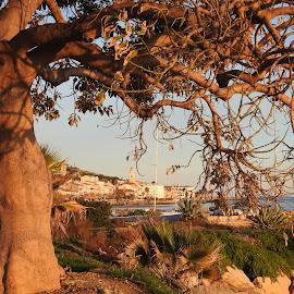 grande albero sul mare by Patrizia Emiliani - Nature Up Close Trees & Bushes ( mare, albero,  )