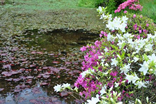 Gondremer, au bord de l'eau