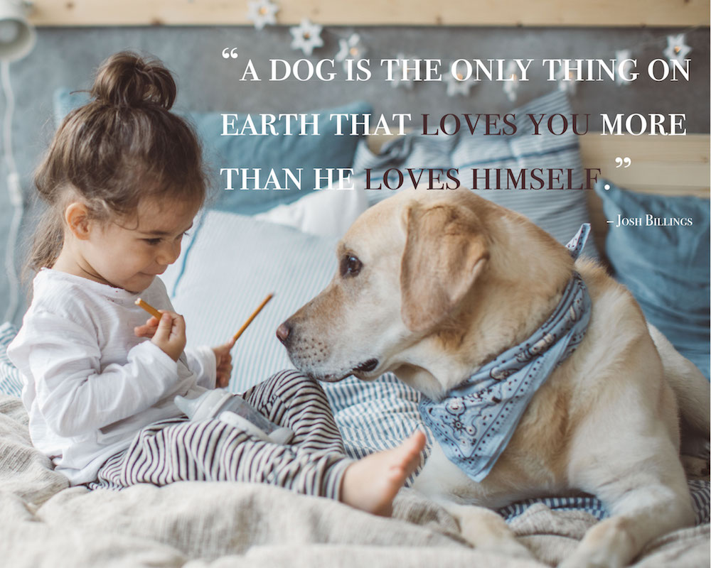 Image result for dog quotes