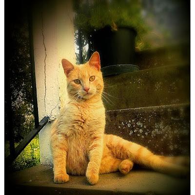 Orange cat. di paoletta76