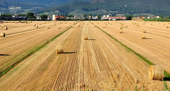 La prospettiva del grano. di Andrea Frati
