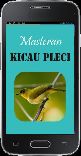 Masteran Kicau Pleci