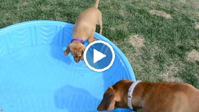 Video: I like water!!!