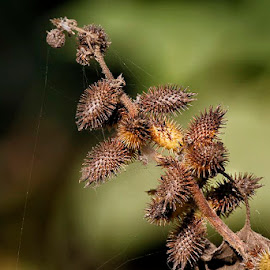 f7 by Abdul Rehman - Nature Up Close Other plants (  )