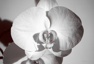 Photo: ...white...  Beauty in monochrome... My lovely white orchid, re-share for my new followers to see and those of you who missed it when posted for a first time...  Contribution to #monochromemonday +Monochrome Monday by +Hans Berendsen, +Jerry Johnson, +Manuel Votta, +Steve Barge and +Nurcan Azaz; #macromonday +Macro Monday by +Kerry Murphy, +Jennifer Eden, +Kelli Seeger Kim and +Jake Easley; #breakfastclub  +Breakfast Club by +Gemma Costa; #canonusers   #canon #canonphotographers   #canonphotography , +Canon Users #promotephotography +Promote Photography; #photography #PlusPhotoExtract  #10000photographersBWmonochrome +10000 Photographers BW Monochrome by +Robert SKREINER; #HQSPMonochrome by +Blake Harrold and  +Luis Vivanco; #flowers   #flower   #orchidphotography   #floral   New addition to my Artflakes Portfolio: http://www.artflakes.com/en/products/white-47
