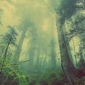 Deep Forest Atom Theme icon