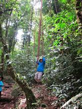 Photo: Jane watching Tarzan swing through the jungle