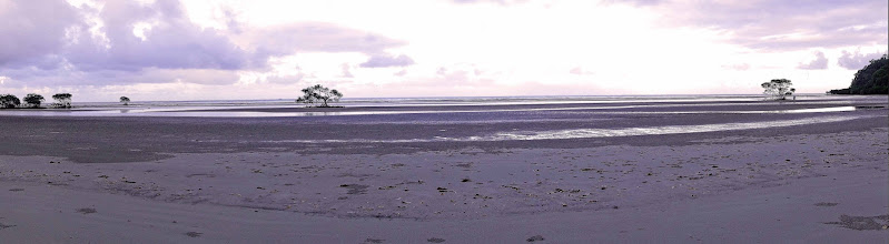 Photo: Morning low tide at Cape Tribulation.
