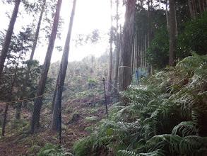 左は真新しい植林