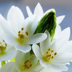 Flower by Jane Fourie - Flowers Single Flower (  )