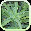 Каталог лекарственных растений file APK Free for PC, smart TV Download