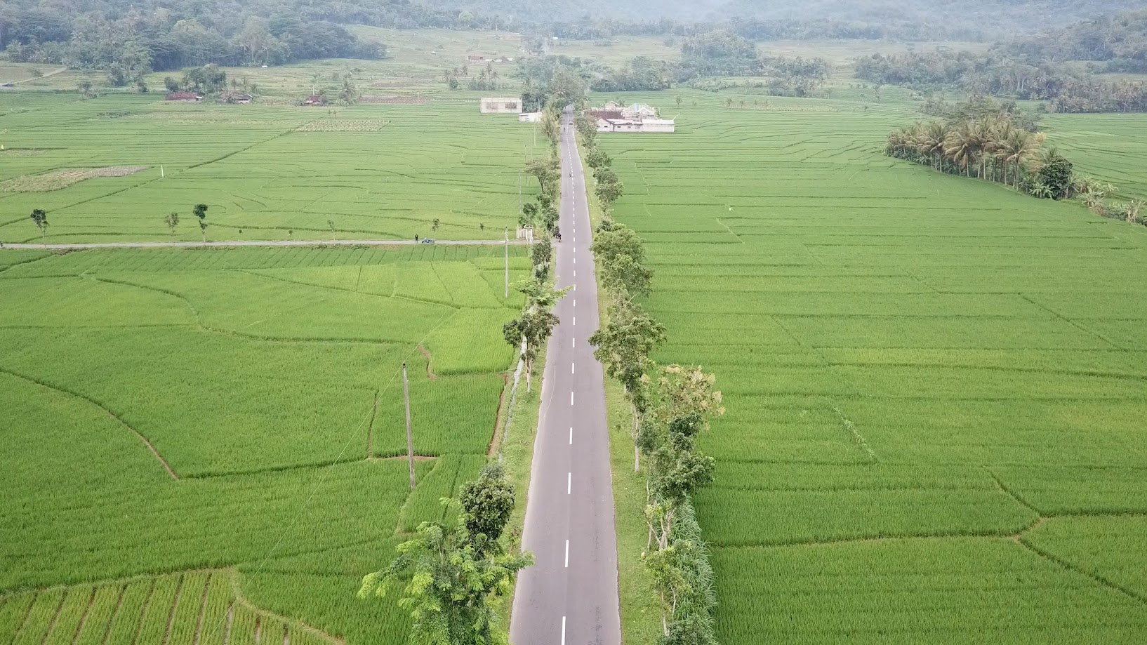 Panorama Sawah Nanggulan Kulonprogo