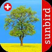 App Icon for Baum Id Schweiz - Bäume der Schweiz App in Czech Republic Google Play Store