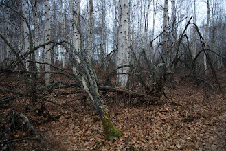 Photo: www.wanderinginfairbanks.com