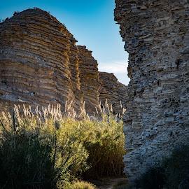 by Steven Aicinena - Nature Up Close Rock & Stone ( winter, wildlife, big bend national park, landscape )