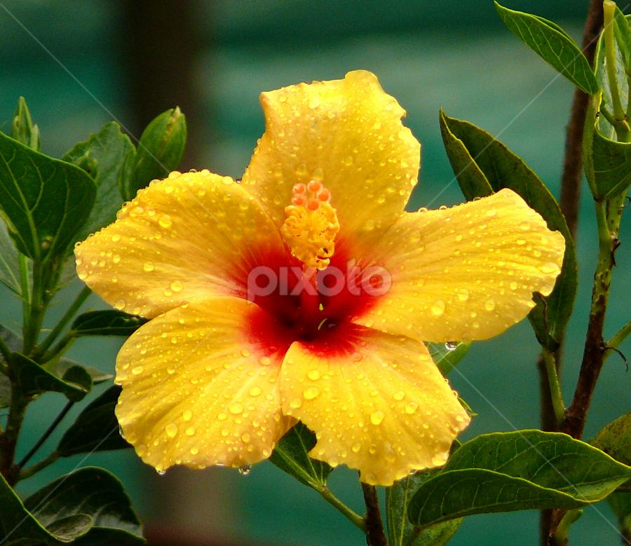 by Pradeep Krishnan - Nature Up Close Flowers - 2011-2013