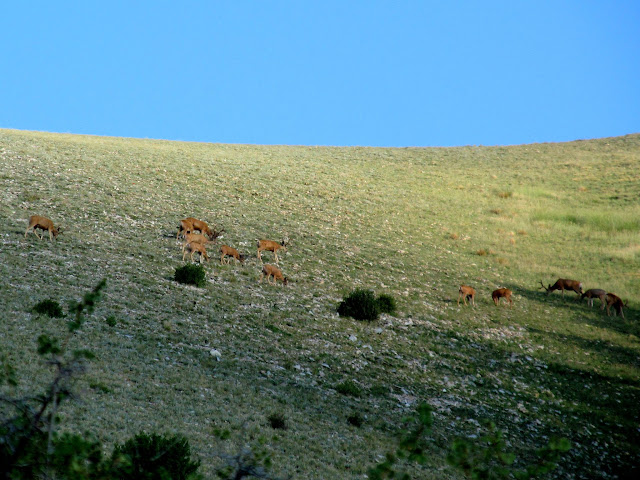 Grazing deer near Bull Creek Pass