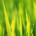 live grass wallpaper icon