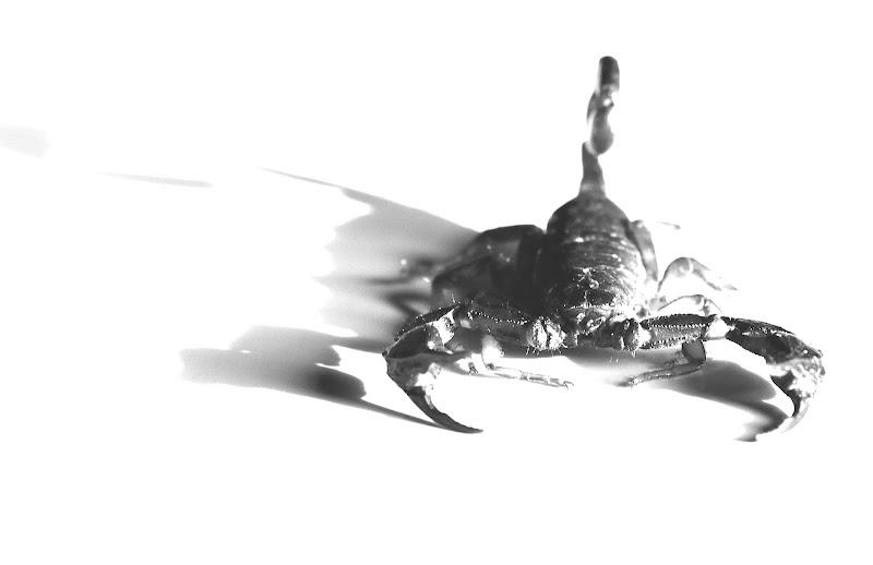 Scorpione di christiandeledda