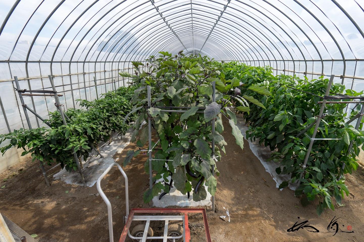 茄子栽培ハウス