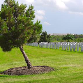 by Debbie Jones - City,  Street & Park  Cemeteries ( veterans, national )