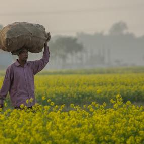 Hard worker  by Qamrul Hassan Shajal - People Professional People ( field, hard worker, yellow mustered field, winter, village, farmer, ground, people, human )
