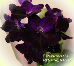 Photo: Bristol's Black Bird