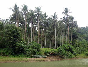 Photo: Когда река входит в ущелье, место домов занимают деревья и кусты