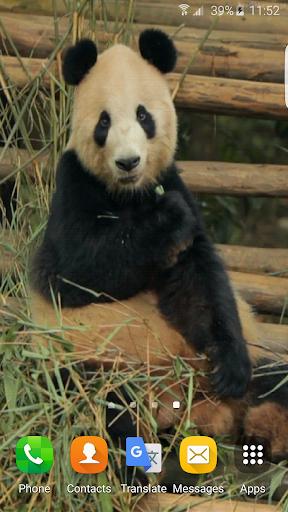 熊猫动画墙纸