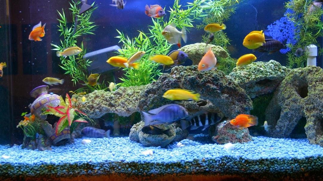 Aquarium Shop And Photo Studio Mts Aquarium Shop In Gomti Nagar