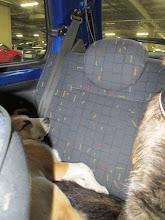 Photo: Helmin perusasento autossa, mahdollisimman rennosti.