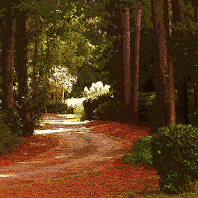 a path by Edward Gold - Digital Art Places ( artistic objects, digital photography, bushes, brown leaves, green bushes, scenic, trees, digital art,  )