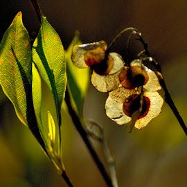 Leaves backlit. by Govindarajan Raghavan - Nature Up Close Leaves & Grasses (  )