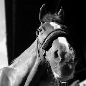 by Joanna Holland - Animals Horses