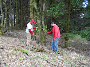 Photo: Discovery of a service berry tree at the edge of the spruce plantation