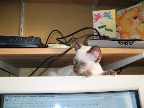 Photo: En zo ligt Makoto steeds boven op de warme PC