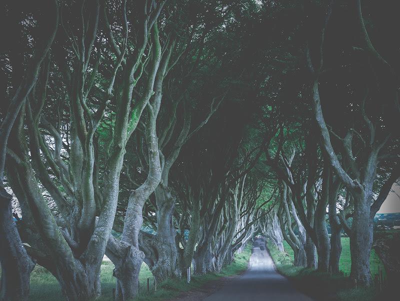 King's Road di paola grassi