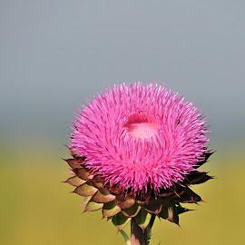 by Helen Beatrice - Flowers Single Flower