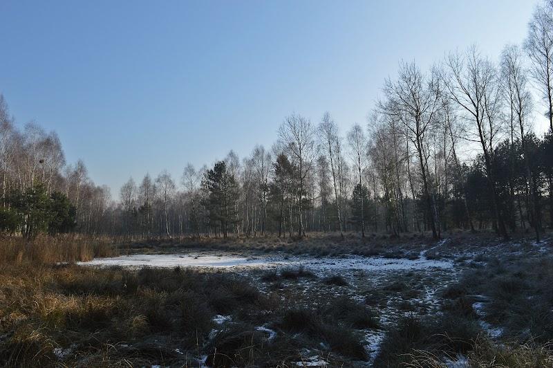 [Fot. 21] Jezioro Dębiniec | Dębiniec (gm. Wielka Nieszawka, pow. toruński), 2017