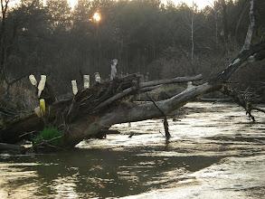 Photo: natura i (pseudo) cywilizacja