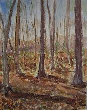 Photo: Bosque en Washington, 31 x 23 cm, 2007, 250 €