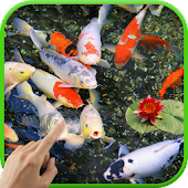 Koi Garden Live Wallpaper