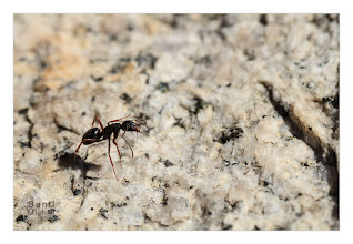 Photo: Eastern Sierras-20120717-731