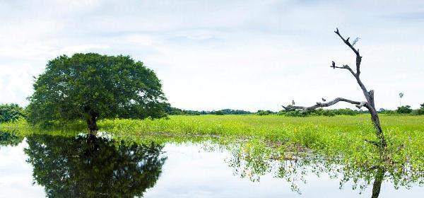 Campos Amazónicos