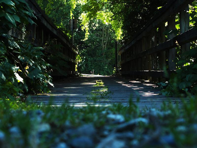Dante e la divina foresta di marta_riu