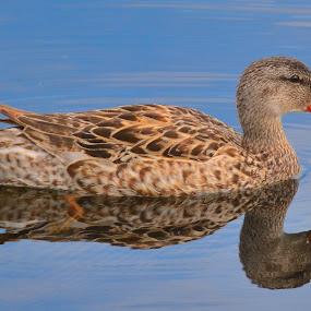by Lyn Daniels - Animals Birds (  )